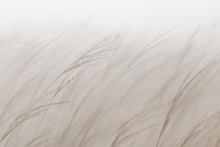 露營拍攝分享(一) –  山間野草